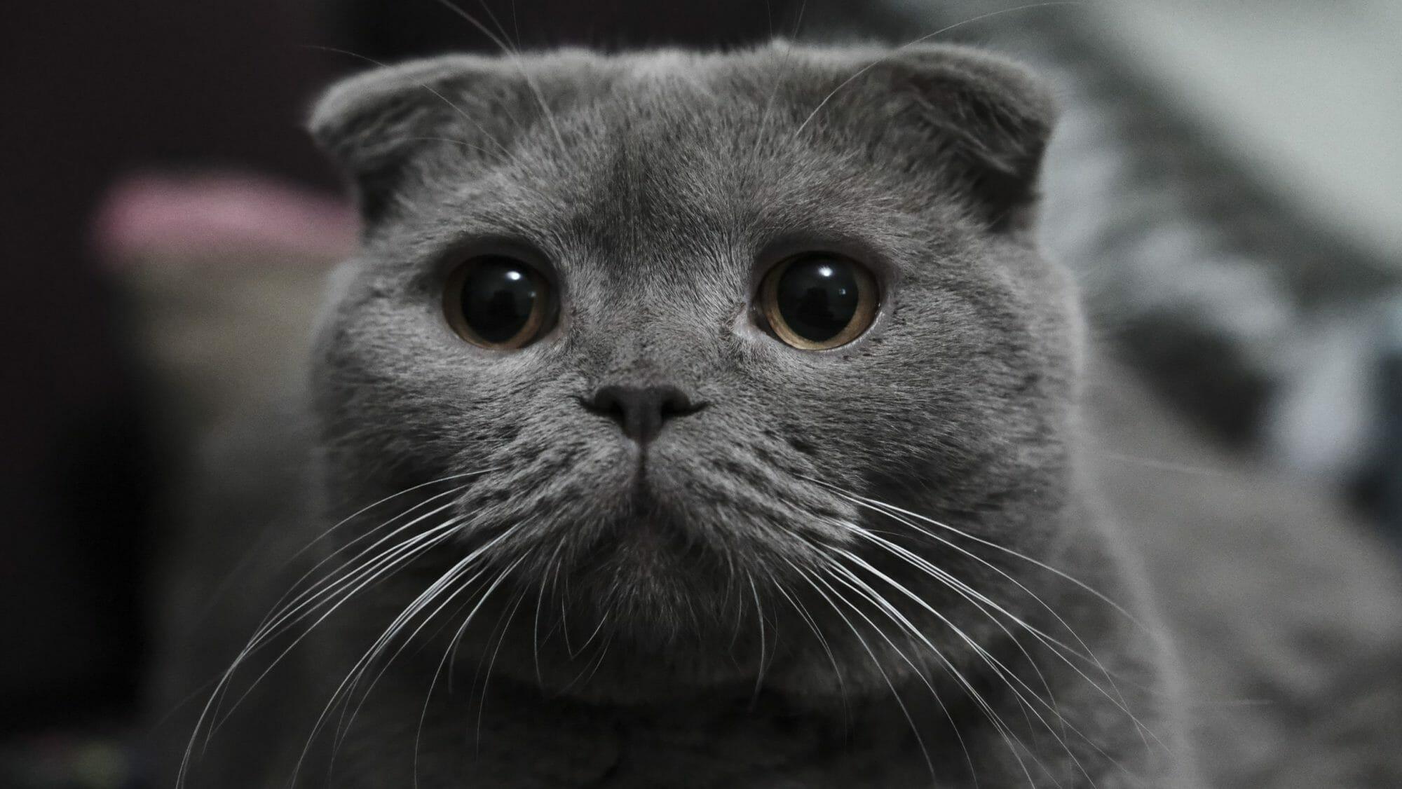 Grey-kitty-892223-scaled